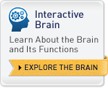 Interactive Brain - Learn About the Brain and Its Functions