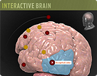 Interactive Brain Image